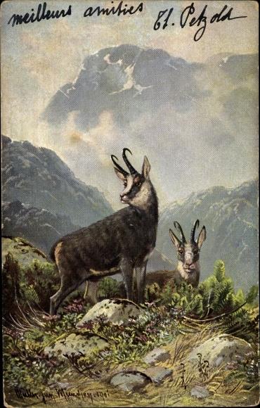 Künstler Ak Müller, Moritz jun., Gämsen in den Bergen, Landschaftsmotiv, Jagd