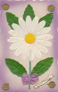 Stoff Ak Amitie sincere, Margerite, Blume, weiße Blüte, Blätter, Schleife