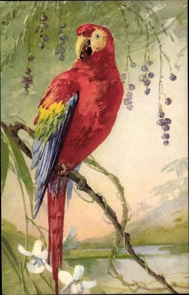 Künstler Ak Papagei auf einem Ast sitzend, Ara, Rotes Federkleid