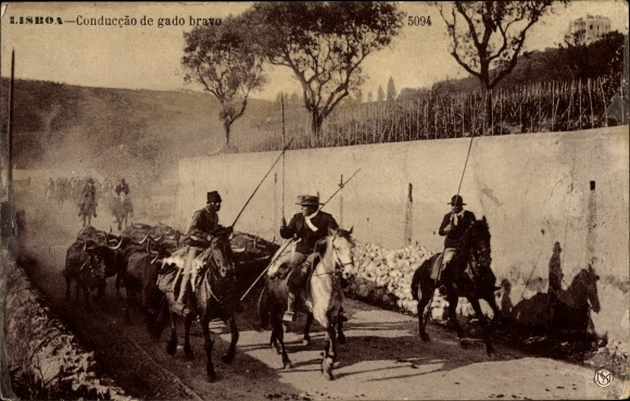Ak Lisboa Lissabon Portugal, Conducção de gado bravo, Führung, Rinder