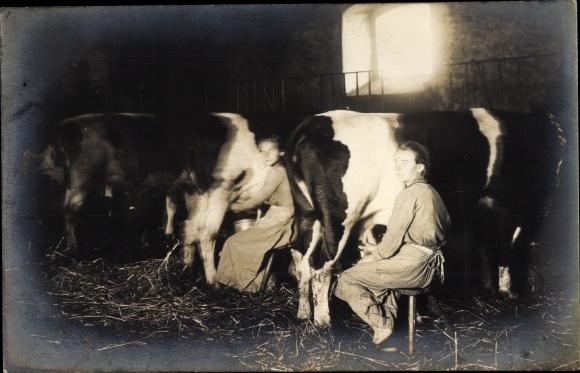 Foto Ak Frau beim Melken einer Kuh, Kuhstall