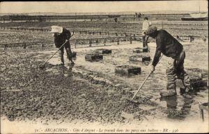 Ak Arcachon Gironde, Le travail dans les parcs aux huîtres, Austernzucht