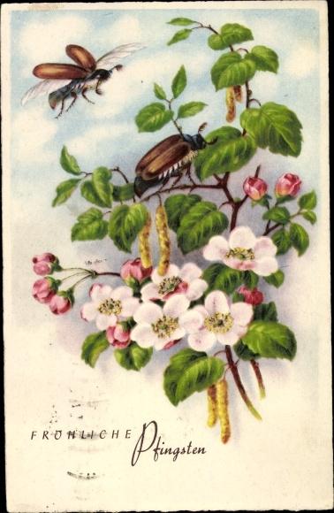 Ak Glückwunsch Pfingsten, Maikäfer, Baumblüte