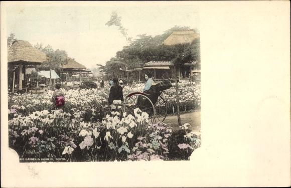 Ak Tokio Präf. Tokio Japan, Iris Garden in Horikiri