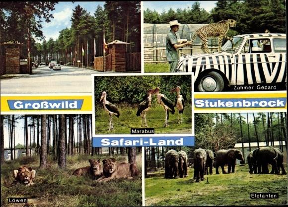 Ak Stukenbrock in der Senne, Safari Land, Zahmer Gepard, Marabus, Löwen, Elefanten