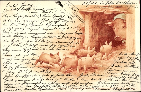 Litho Schwein wartet im Stall auf Ferkel