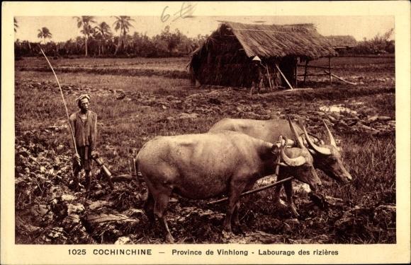 Ak Labourage des rizières, boeufs, Vietnamesischer Bauer mit Rinderpflug beim Reisanbau