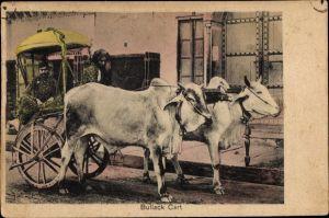 Ak Indien, Bullock Cart, Indischer Ochsenkarren