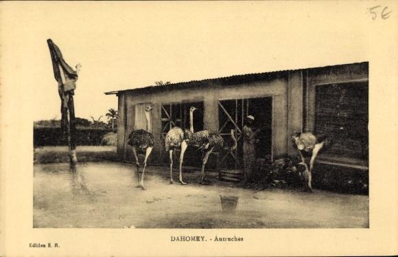 Ak Dahomey Benin, Autruches, Straußenfarm