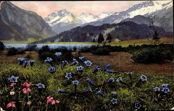 Ak Alpenflora, Enzian, Pinus pumilio, Primula farinosa, Nenke und Ostermaier 522 Nr. 933