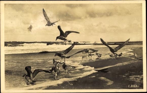 Ak Möwen im Flug und am Strand, Meerpartie, Wellen