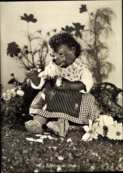 Ak Mecki der Igel, Er liebt mich doch, Igelfrau zupft Blütenblätter von Blumen