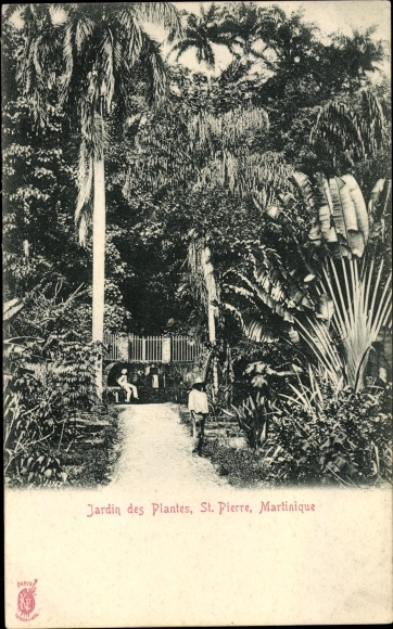 Ak Saint Pierre Martinique, Jardin des Plantes, Gartenpartie, Baum der Reisenden