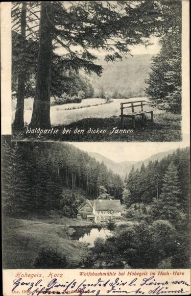 Ak Hohegeiß Braunlage im Oberharz, Wolfsbachmühle, Waldpartie bei den dicken Tannen