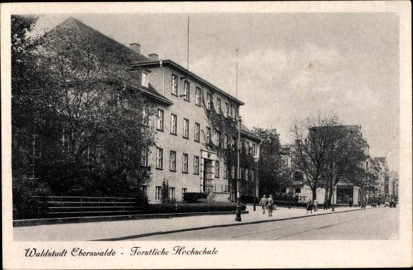 Ak Eberswalde in Brandenburg, Forstliche Hochschule, Straßenpartie