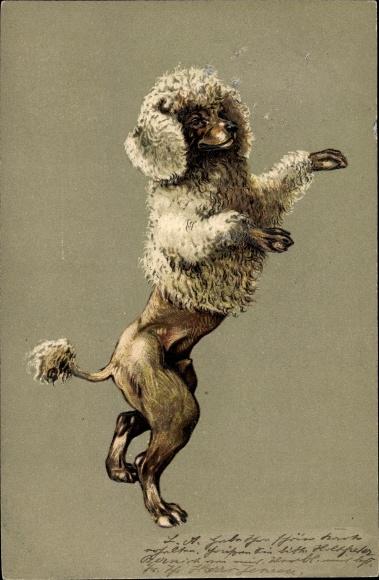 Präge Litho Pudel auf den Hinterbeinen stehend, Hundeportrait