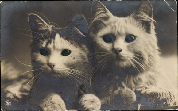 Ak Zwei Hauskatzen, Katzenportrait, NPG 3483