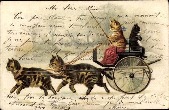 Litho Vermenschlichte Katzen in einer Kutsche, Katzen als Zugtiere, Kutscher