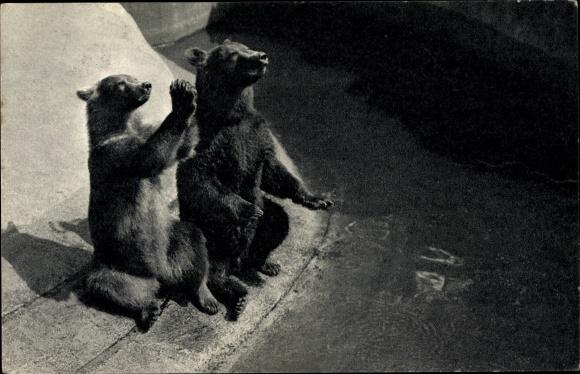 Ak Paris Frankreich, Parc Zoologique du Bois de Vincennes, un couple d'ours bruns, Braunbären