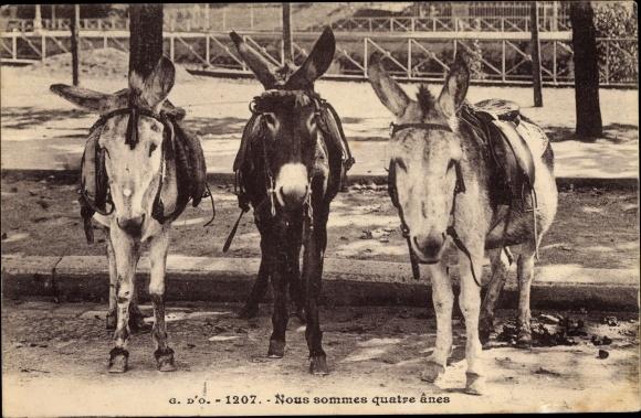 Ak Nous sommes quatre anes, Drei Esel mit Zaumzeug und Sätteln