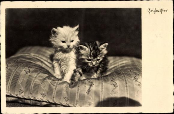 Ak Zwei Hauskatzen, Kitten, Kopfkissen