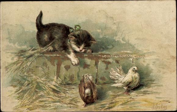 Präge Künstler Ak Kätzchen auf einer Mauer belauert Tauben, Katze, Schleife