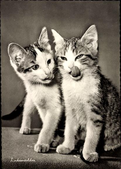 Ak Zwei Hauskatzen, Kitten, Leckermäulchen