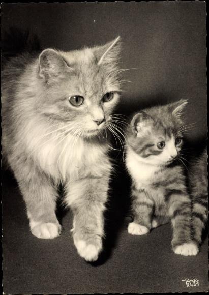 Ak Zwei Hauskatzen, Mutter mit Kitten