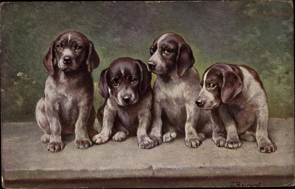 Künstler Ak Reichert C Vier Junge Hunde Weiß Braune Hundewelpen