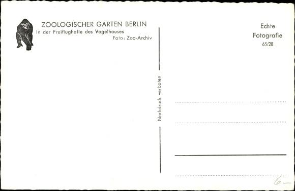 Ak Berlin Tiergarten, Zoologischer Garten, Vogelhaus 1