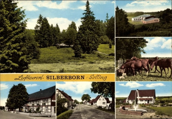 Ak Silberborn Holzminden in Niedersachsen, Gasthaus, Pferde auf der Koppel, Straßenpartie 0