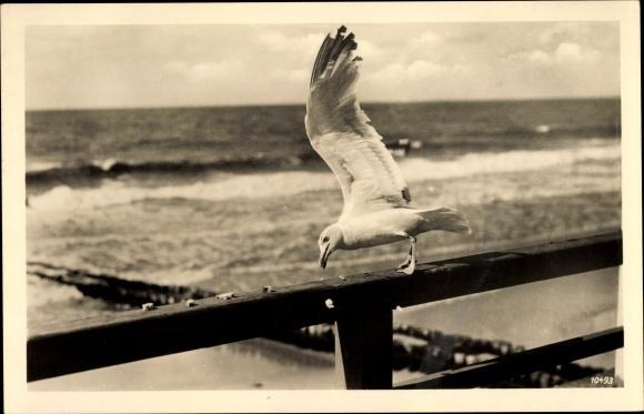 Ak Möwe, Vogel, Blick zum Meer 0