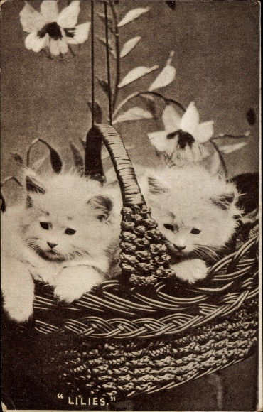 Ak Zwei weiße Hauskatzen, Kitten, Korb, Lilies 0