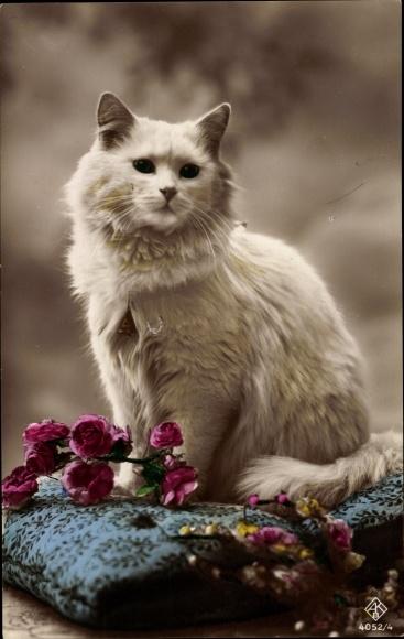 Ak Weiße Hauskatze, Blumen, Kopfkissen 0