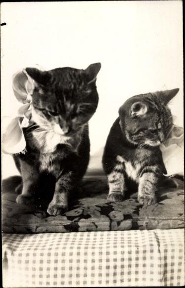 Foto Ak Zwei Hauskatzen, Fritz und Micke, Schleife, Kissen 0