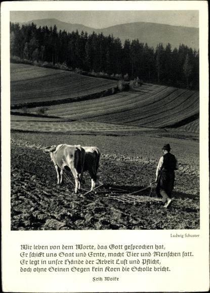 Gedicht Ak Fritz Woike, Bauer, Pflug, Feld, Rinder, Foto. Ludwig Schuster