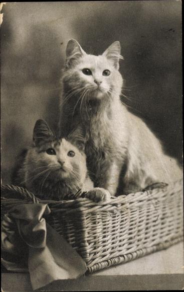 Ak Zwei Hauskatzen, Korb