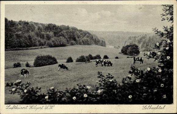 Ak Höhr Grenzhausen im Westerwaldkreis, Luftkurort, Selbachtal