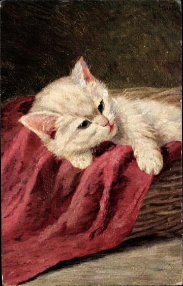 Künstler Ak Mack, M., Weiße Hauskatze, Kitten, Korb, Rote Decke