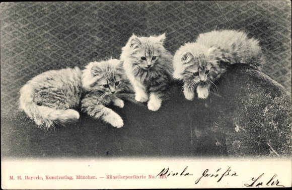 Ak Drei Hauskatzen, Kitten, Getigert, Kätzchen