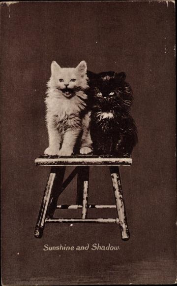 Ak Zwei Hauskatzen, Sunshine and Shadow, Schwarz und weiß, Hocker