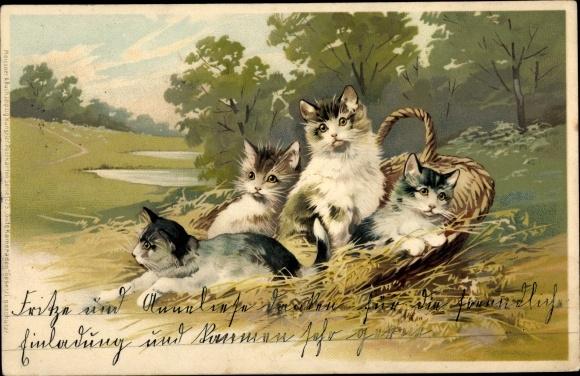 Künstler Litho Katzen, junge Kätzchen in einem Korb, Landschaftsmotiv, Meissner & Buch 1275