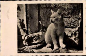 Foto Ak Sitzende weiße Katze vor einer Steinmauer, Kätzchen