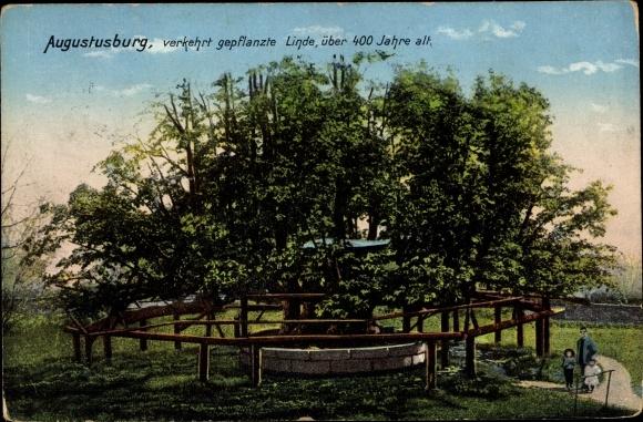 Ak Augustusburg im Erzgebirge, 400 Jahre alte Linde