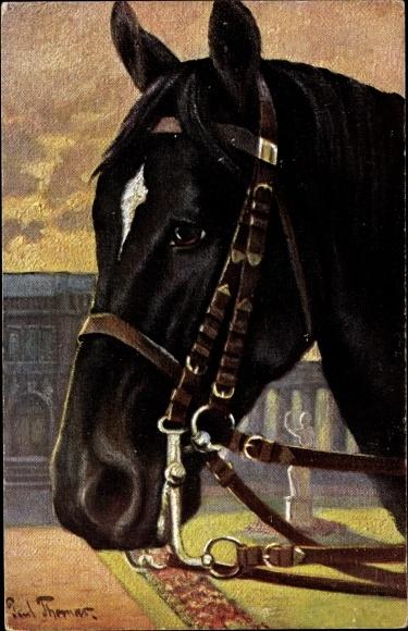 Künstler Ak Thomas, Paul, Rassepferde, Pferdeportrait, Pferd mit Zaumzeug, Primus 353