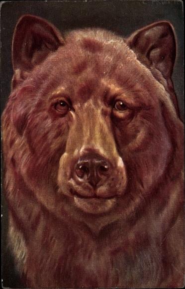 Künstler Ak Frontalansicht von einem Braunbär, Schnauze, Fell