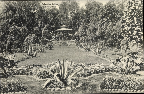 Ak Kołobrzeg Kolberg Pommern, Rosengarten, Aloe Vera, Pavillon