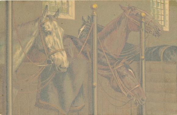 Künstler Ak Pferde im Pferdestall, Kopfstudien