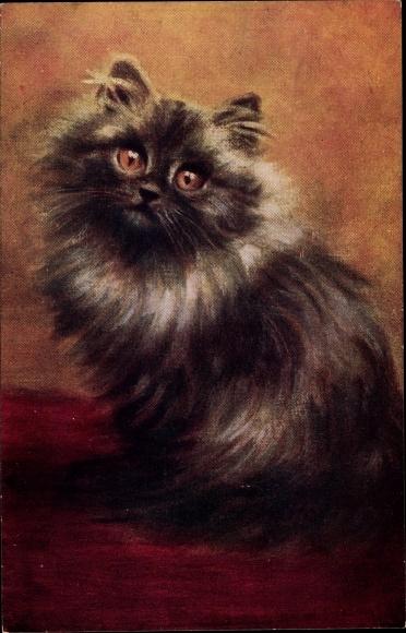 Künstler Ak Katze mit dunklem langen Fell und weißem Halskranz