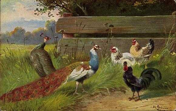 Künstler Ak Schönian, Alfred, Pfau und Hühner auf einer Wiese